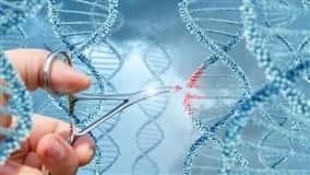 """""""As mutações criadas pela edição de genes podem ser idênticas àquelas criadas pelas técnicas clássicas de reprodução"""