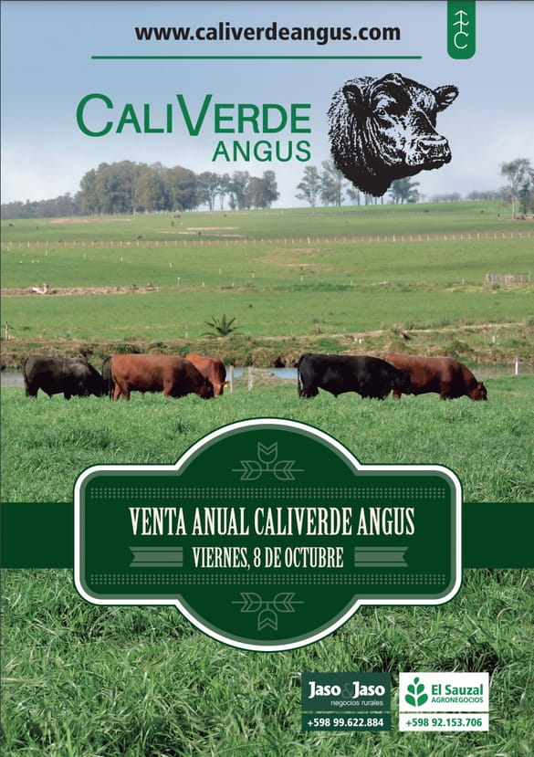 Remate CaliVerde - Angus