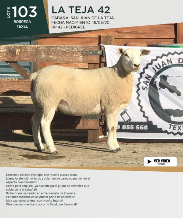 Lote Lote 103