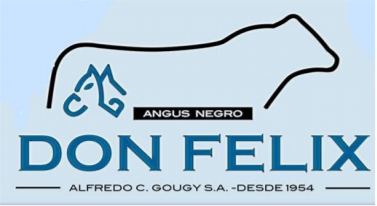 "Lote VAQUILLONAS ANGUS PC ""DON FELIX"""