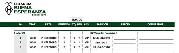 Lote VAQUILLAS HEREFORD