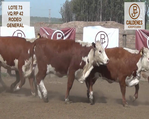 Lote VAQUILLONAS HEREFORD RG (Corral 73)