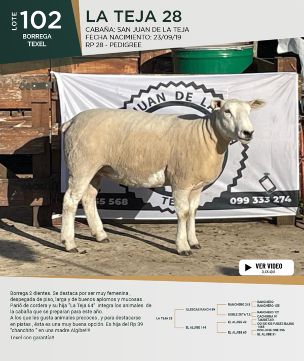 Lote Lote 102